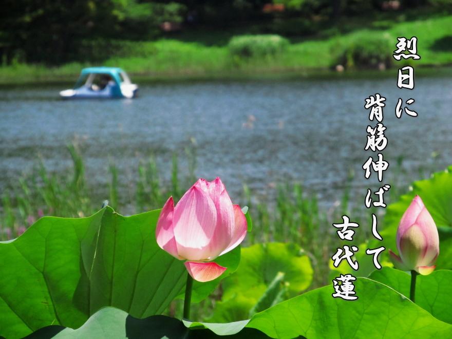 f0137096_1617321.jpg