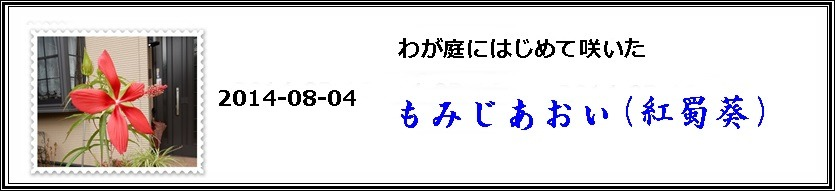 e0033229_17285189.jpg