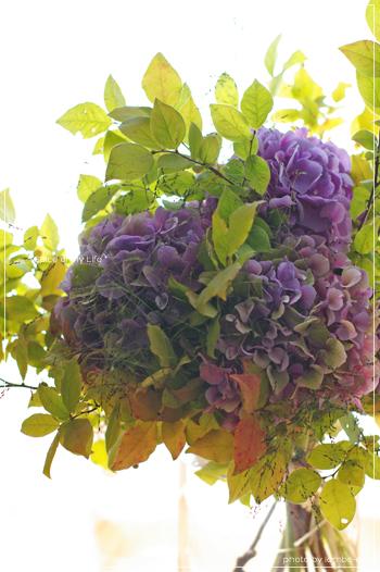紫陽花と夏櫨とグラミネ_f0151946_22595960.jpg
