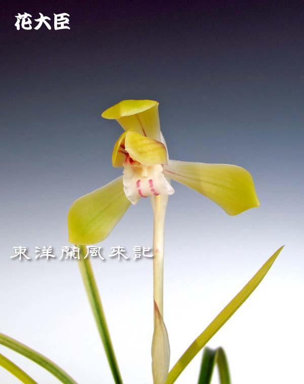 春蘭の新芽2                      No.1421_d0103457_2236566.jpg