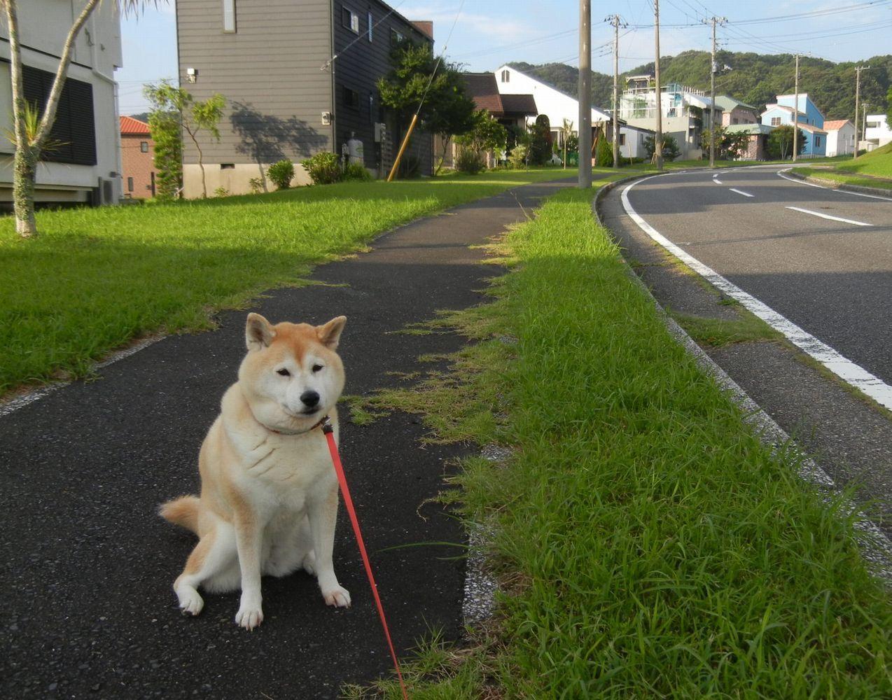 '14,8,4(月)夏のシソジュース作り!_f0060461_10541531.jpg