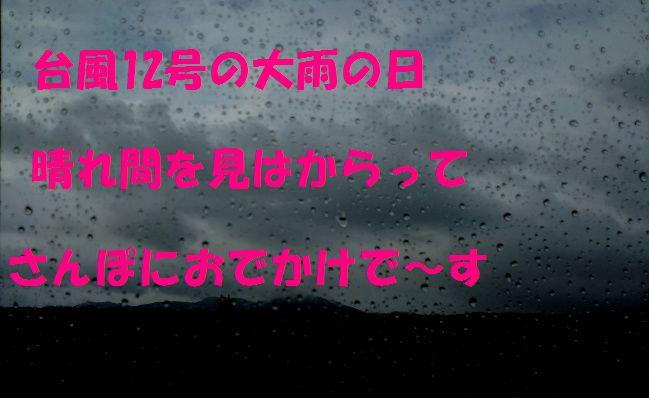 c0025171_2353323.jpg