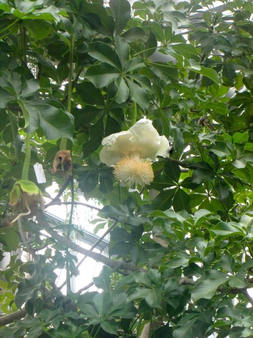 植物園で写生会_e0167771_1443756.jpg