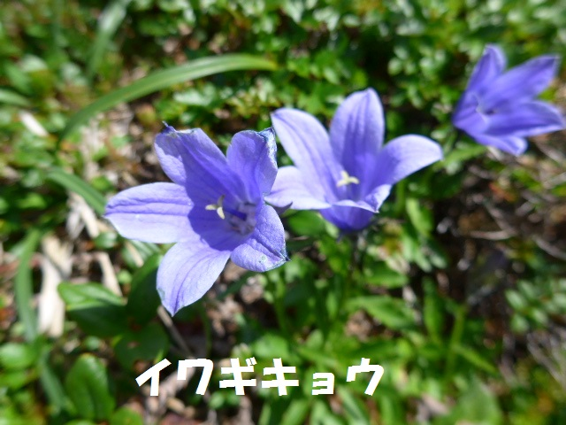 f0350083_16202062.jpg