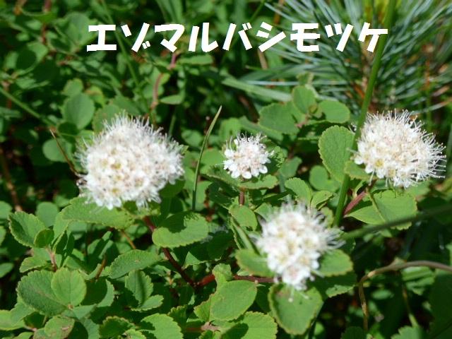 f0350083_162043.jpg