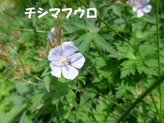 f0350083_16252064.jpg