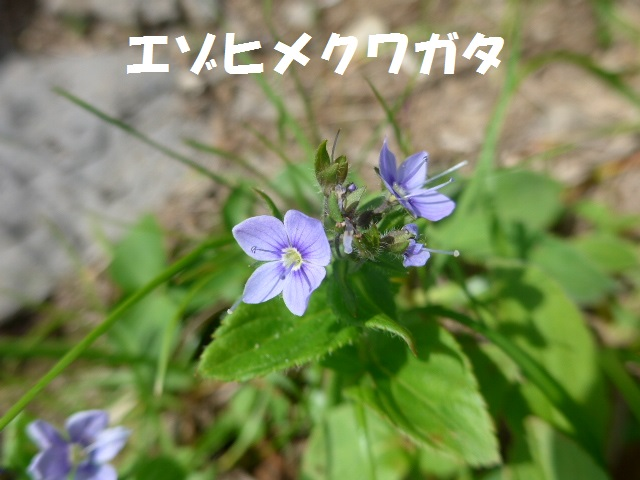 f0350083_16355277.jpg