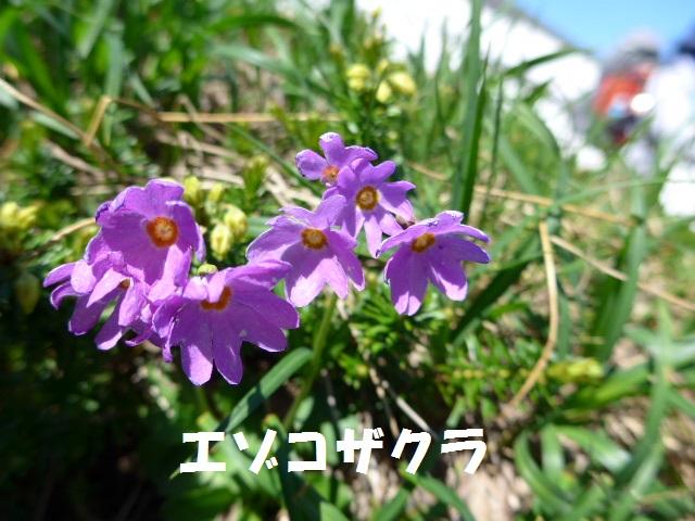 f0350083_1764038.jpg