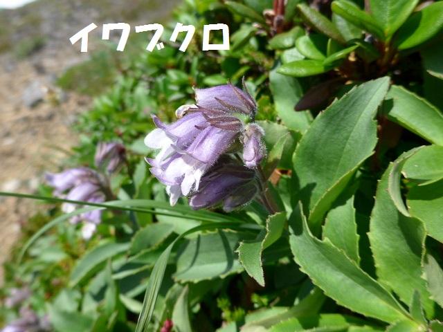 f0350083_1772369.jpg