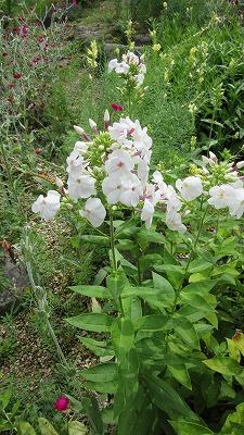 お花のズームアップ2_b0219993_13584158.jpg