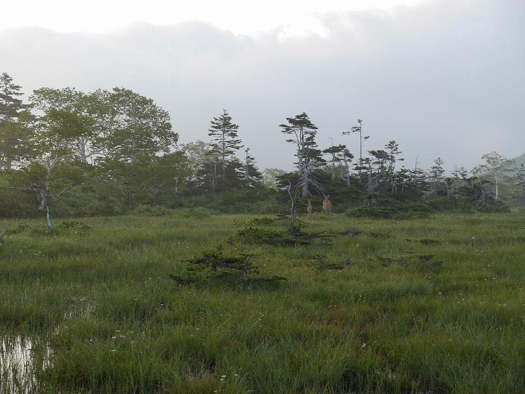 五色岳と忠別岳、8月2日-五色岳編-_f0138096_17595676.jpg