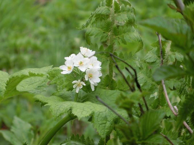 白山 花の写真_d0151699_17301830.jpg