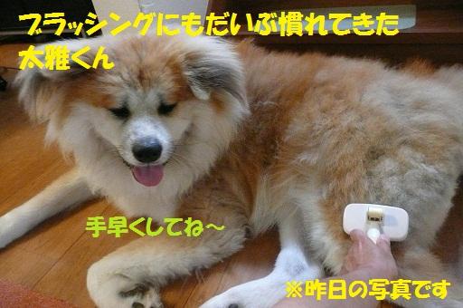 f0121712_15111153.jpg