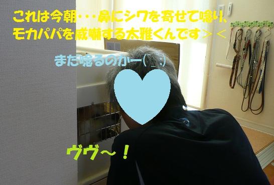 f0121712_15411168.jpg