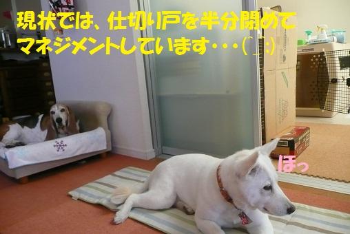 f0121712_1556386.jpg