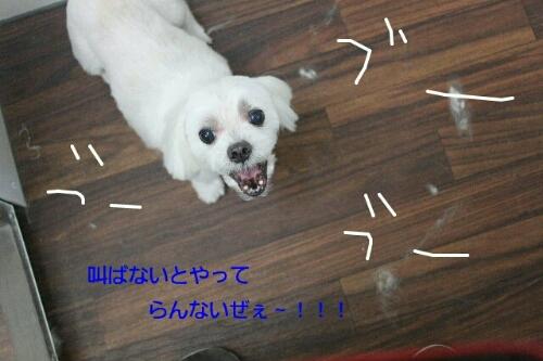 b0130018_19533057.jpg