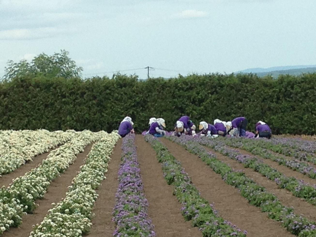 2014 北海道 HOKKAIDER~5 - 夫婦ぅタンデムツー_c0261447_22235160.jpg