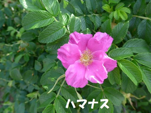 f0350083_17573149.jpg