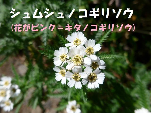 f0350083_19541366.jpg