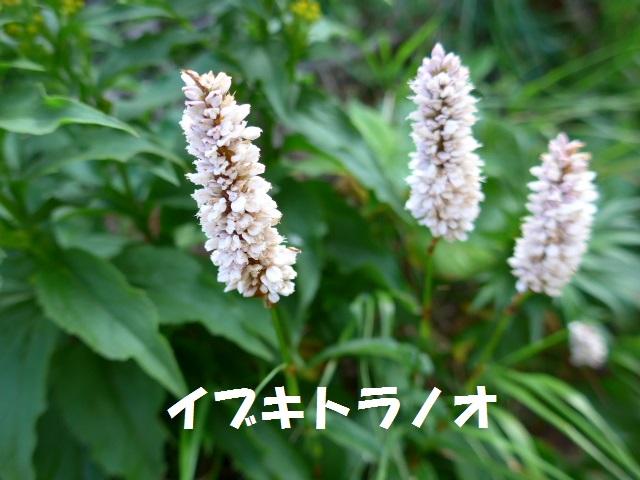 f0350083_19544821.jpg