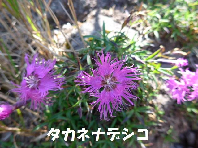 f0350083_19554734.jpg