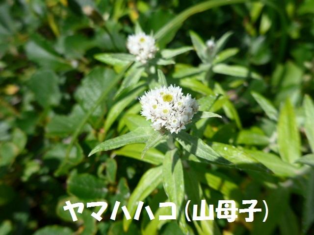 f0350083_19561651.jpg