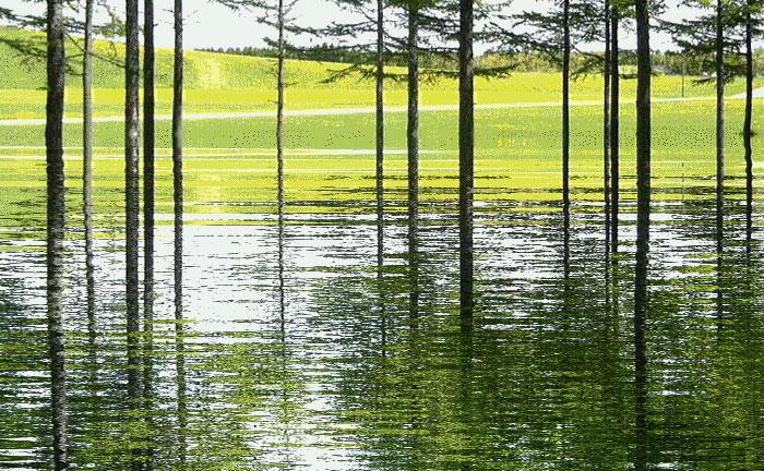 水に映る_d0162994_15141098.jpg