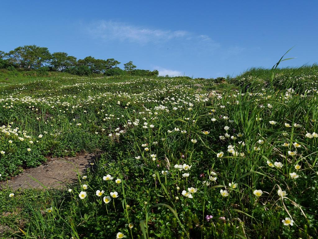 五色岳と忠別岳、8月2日-五色岳の花編-_f0138096_10332473.jpg