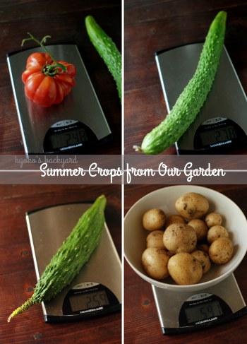 最近収穫した野菜たち_b0253205_6334028.jpg