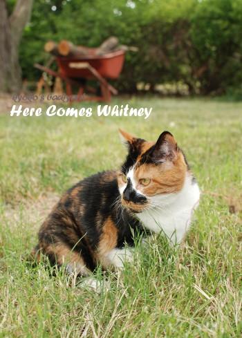 Here Comes Whitney_b0253205_712511.jpg