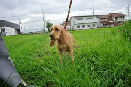 8/6 お散歩01_e0236430_22491287.jpg