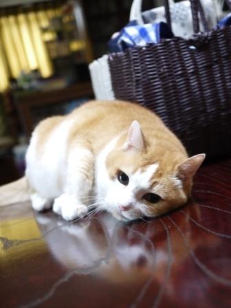 猫のお友だち ふくちゃん編。_a0143140_2225630.jpg