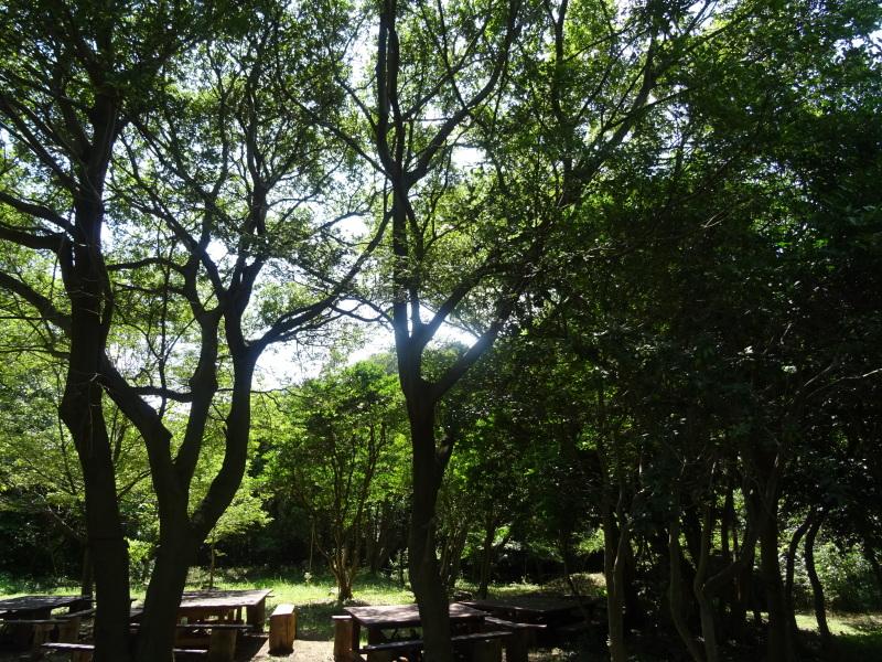 ちょこっと一人作業  in  うみべの森     by     (TATE-misaki)_c0108460_17253979.jpg