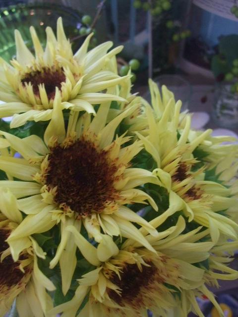 オークリーフ(紫陽花ベレナの秋色)_f0049672_1634332.jpg