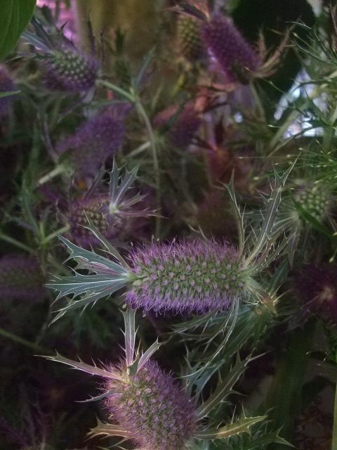 オークリーフ(紫陽花ベレナの秋色)_f0049672_1635299.jpg
