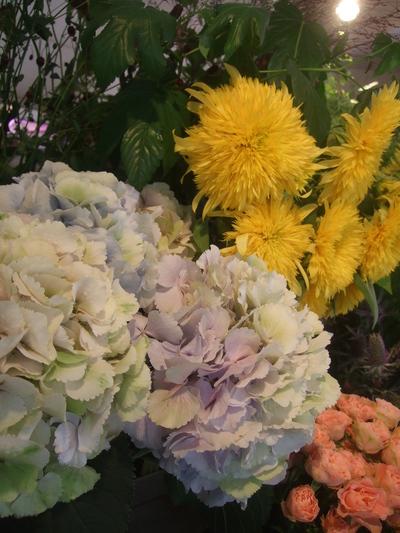 オークリーフ(紫陽花ベレナの秋色)_f0049672_16353494.jpg