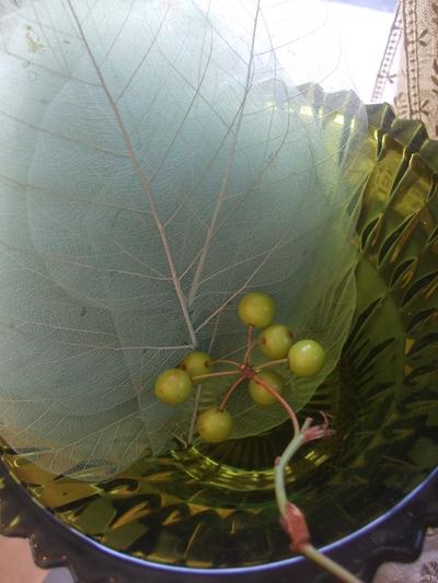 オークリーフ(紫陽花ベレナの秋色)_f0049672_16413199.jpg