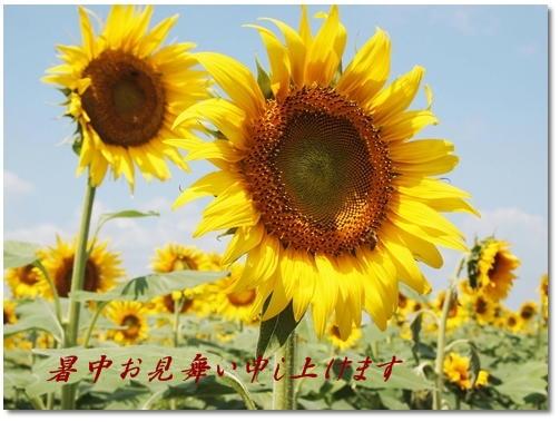 暑中お見舞い申し上げます!!_d0078486_9412981.jpg