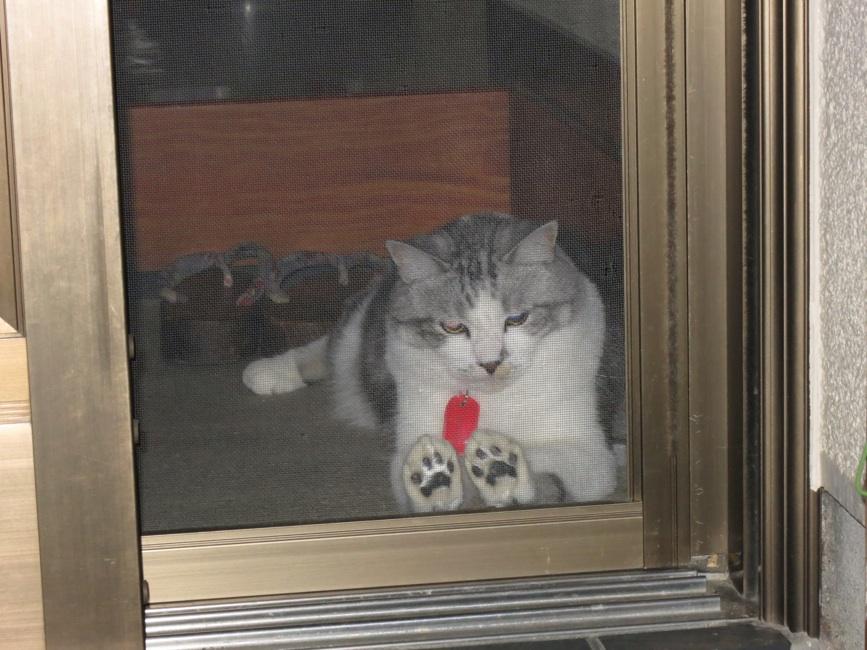 【猫】玄関先で_f0141609_23191149.jpg
