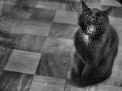 20141010 #blackcat #黒猫_d0176130_2226184.jpg
