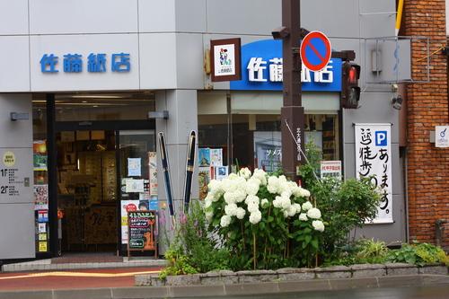 あじさい・ひまわり・コスモス花咲く釧路 8月7日_f0113639_164034.jpg