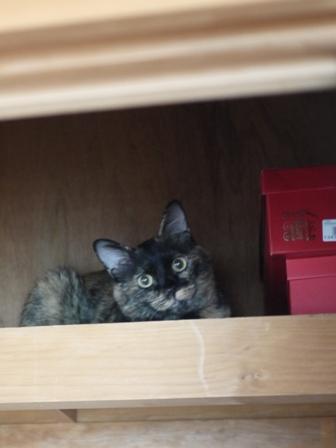 猫のお友だち カーンちゃんイナちゃん編。_a0143140_17503676.jpg
