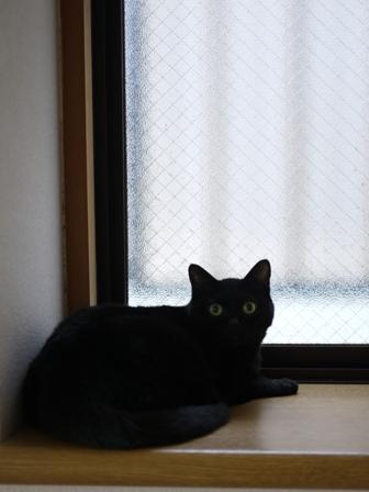 猫のお友だち カーンちゃんイナちゃん編。_a0143140_1750810.jpg
