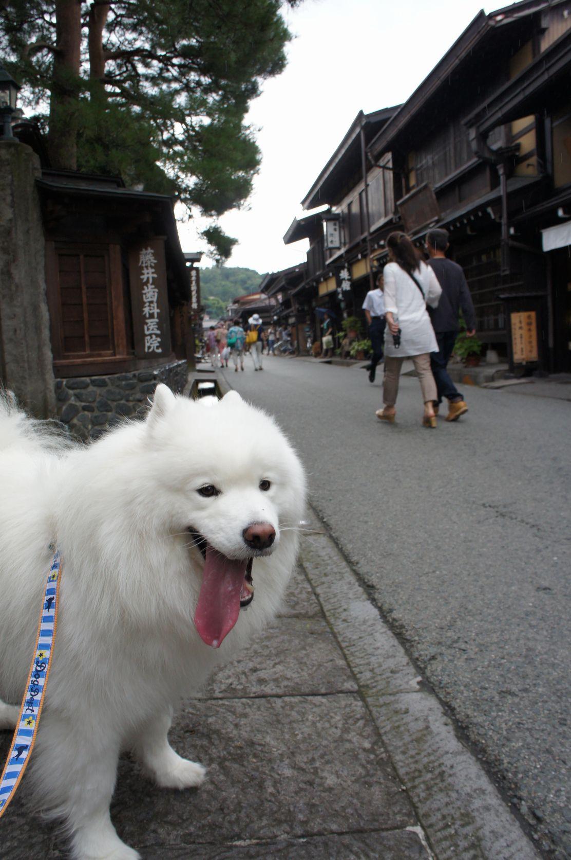 2014年 草津~奥飛騨旅行 その3_f0128542_311199.jpg