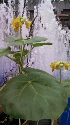 みどりの古本市vol.2@大阪・咲くやこの花館終了しました_a0236063_11185032.jpg