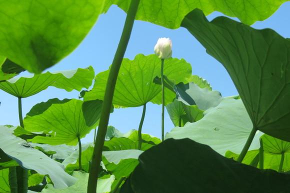 sky140807 熱気が、通過すると葉と花が揺れて、美しい影をつくる。_d0288367_20562539.jpg