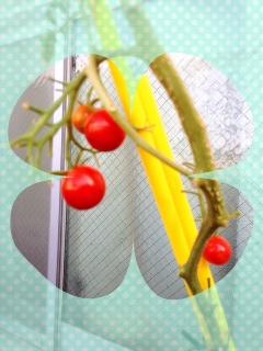 tomato、、、。_d0178587_12251912.jpg