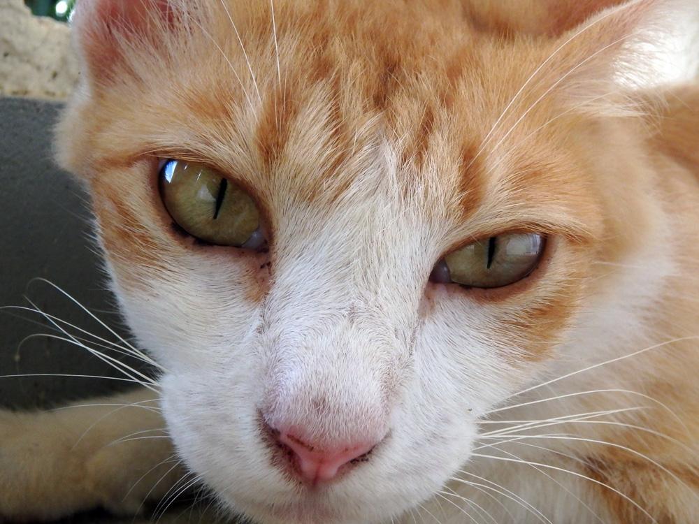 島の猫(2)_e0004009_2282953.jpg