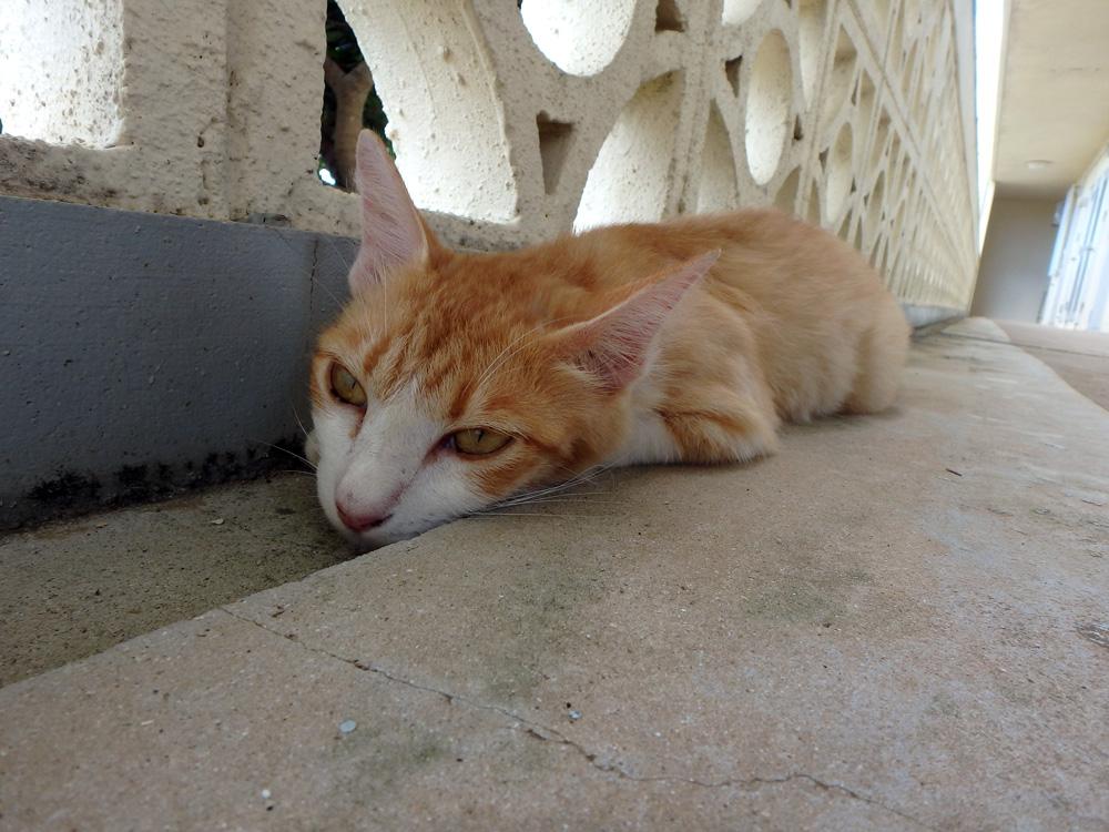 島の猫(2)_e0004009_2284172.jpg