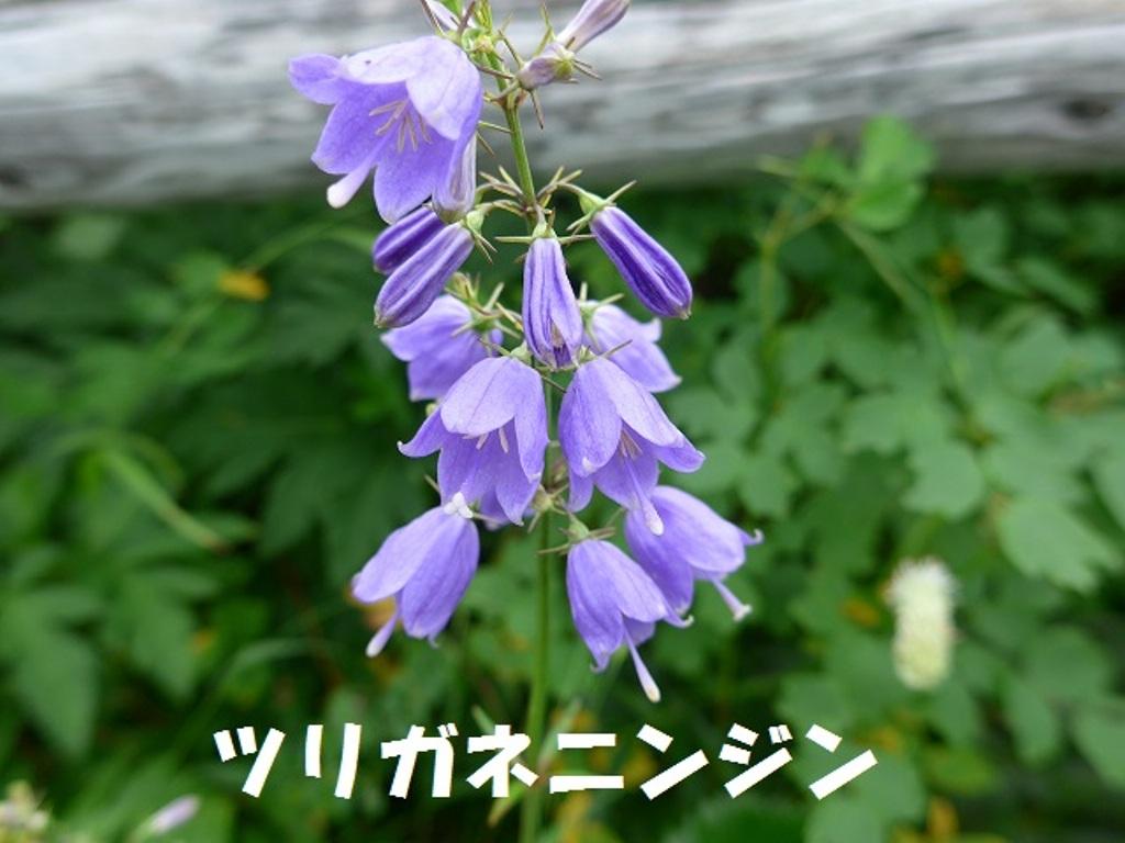 f0350083_1028142.jpg